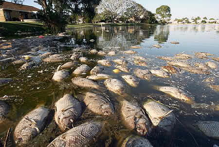 Fish killed in waterways poisoned by acid rain that falls upstrem