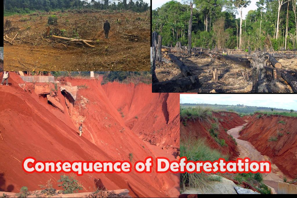 Stripped land erodes