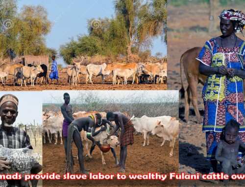 Open-range Grazing of Fulani Cattle Herds Promotes Enslavement of Society's Poor & Must Stop – Chief Ikunna